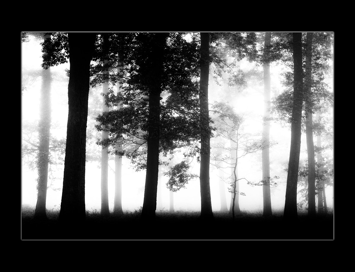 Photograph Forest - Study by Gilles MOLINIER on 500px