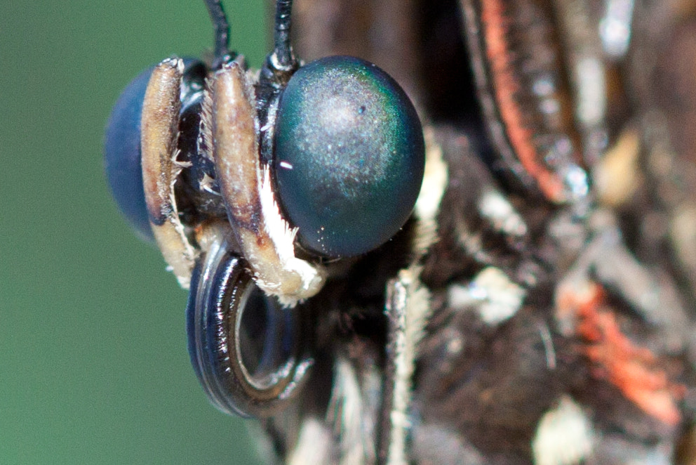 Photograph Bug Eyes by Anton Green on 500px