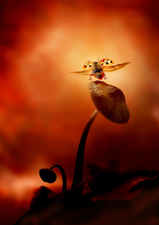 Photograph Dancing ladybird by Leon Baas on 500px