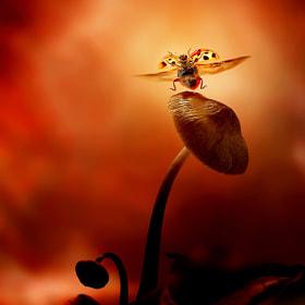 Dancing ladybird by Leon Baas (LeonBaas) on 500px.com