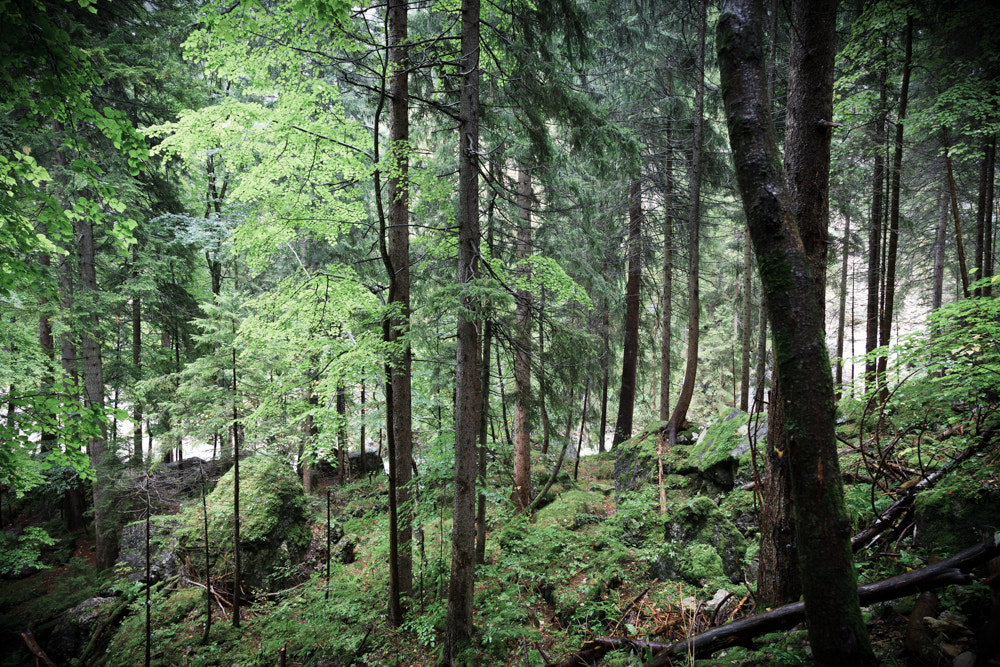 Photograph Forest Through the Trees by Alonzo Wright on 500px