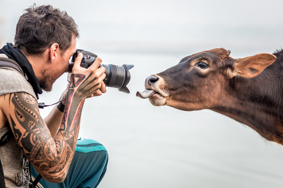 Echenique Photographs a Calf by Shalev Netanel on 500px.com
