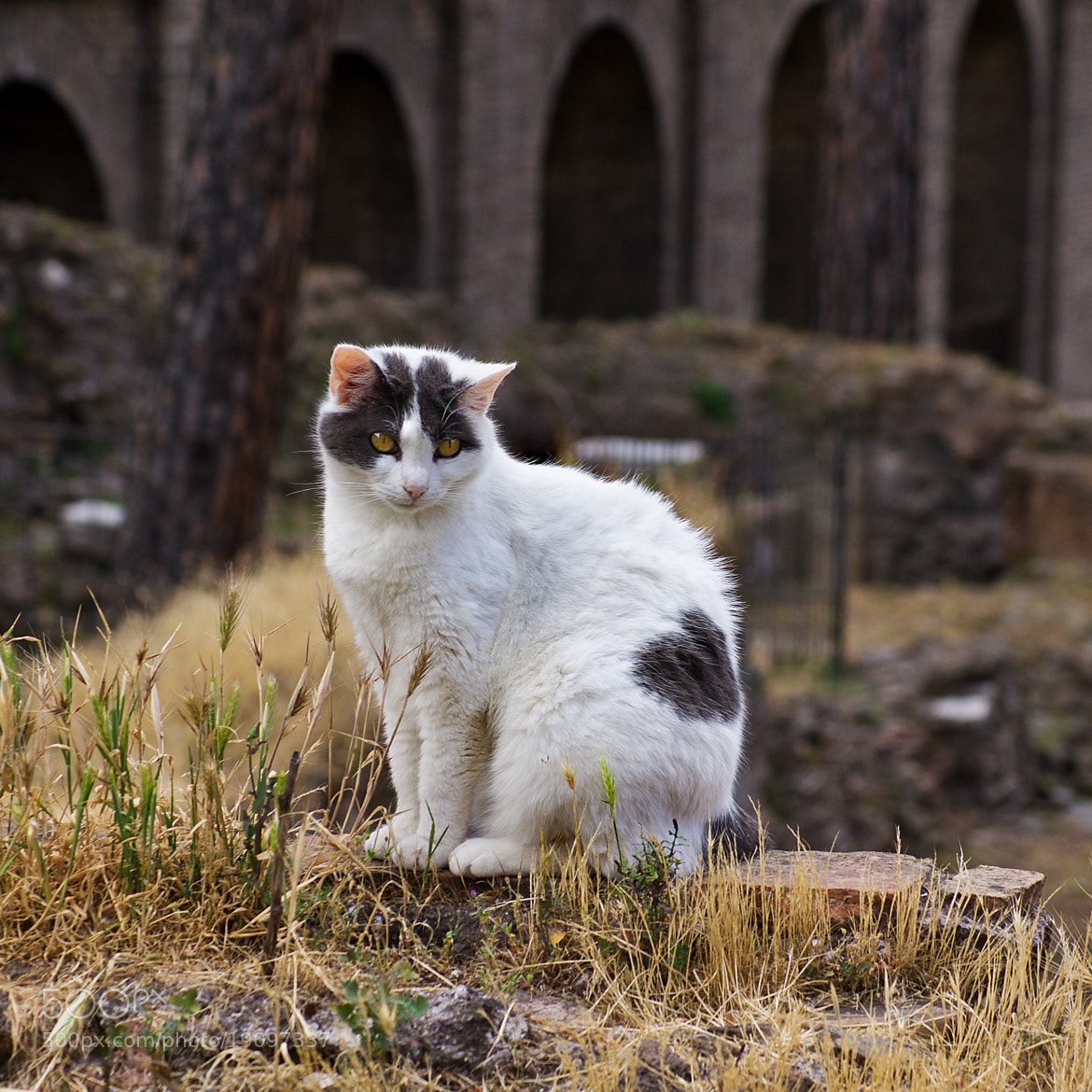 Photograph  Street Cat in Rome by Andrew Kielbowicz on 500px