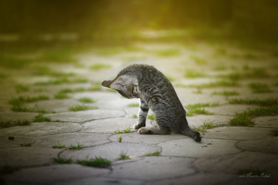 Photograph Lonely kitten. by Nazrin Polad on 500px