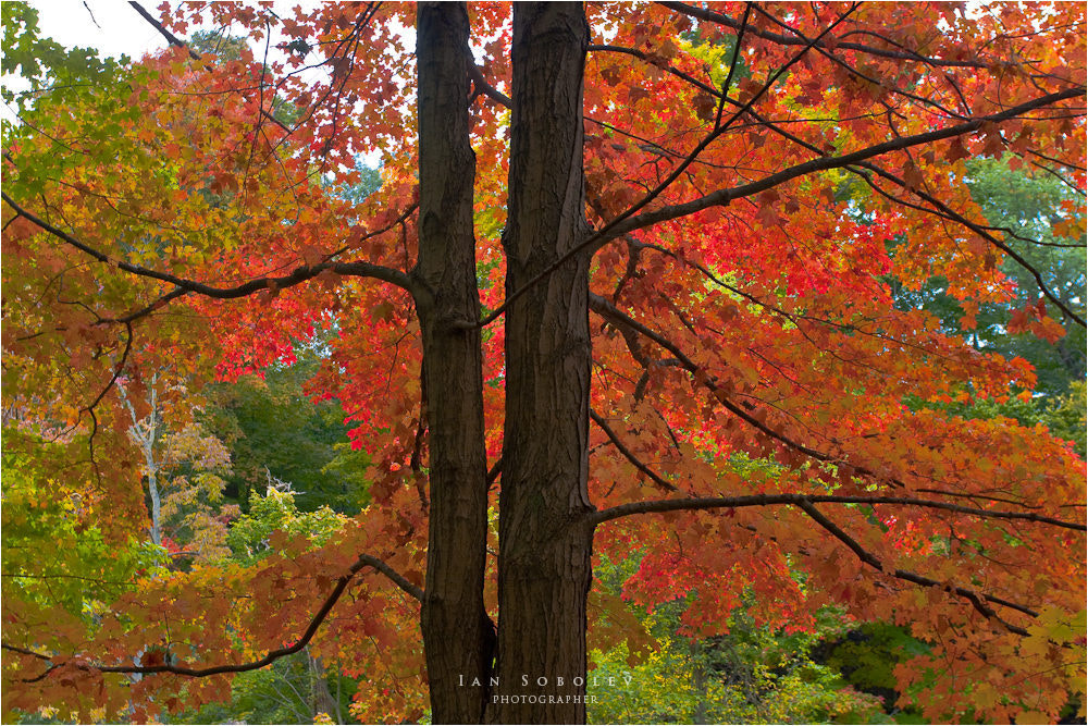 Photograph Color of My Autumn by Evgeny Tchebotarev on 500px