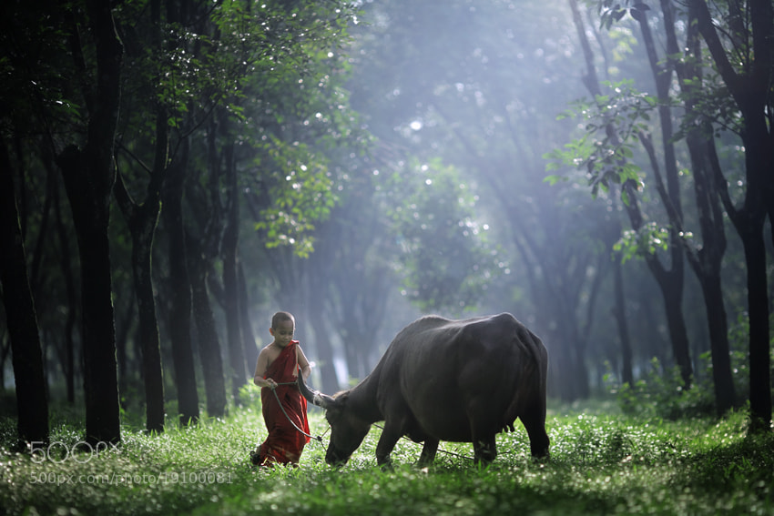 Photograph Dance with Buffalo by JD Ardiansyah on 500px