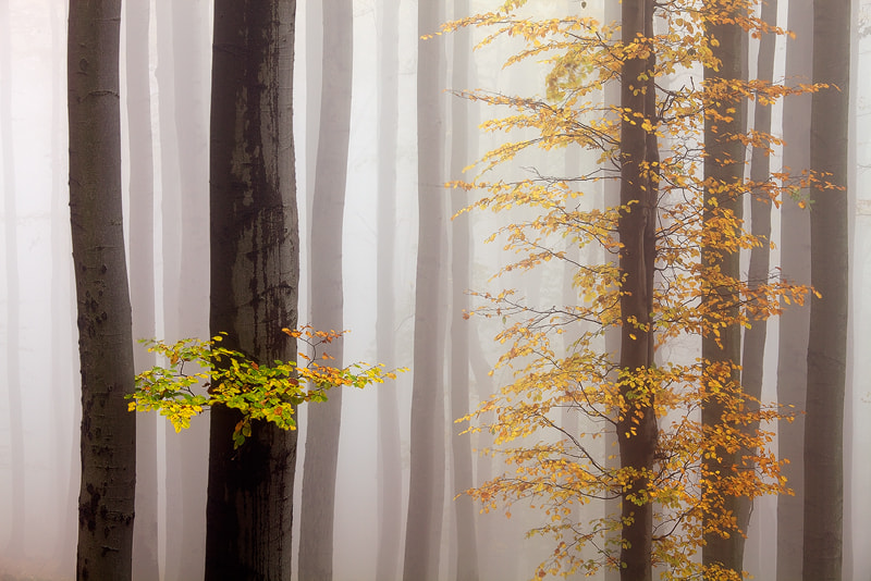 Photograph Colors in the Mist by Martin Rak on 500px