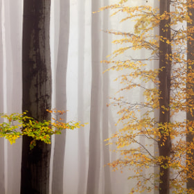 Colors in the Mist by Martin Rak (martas)) on 500px.com