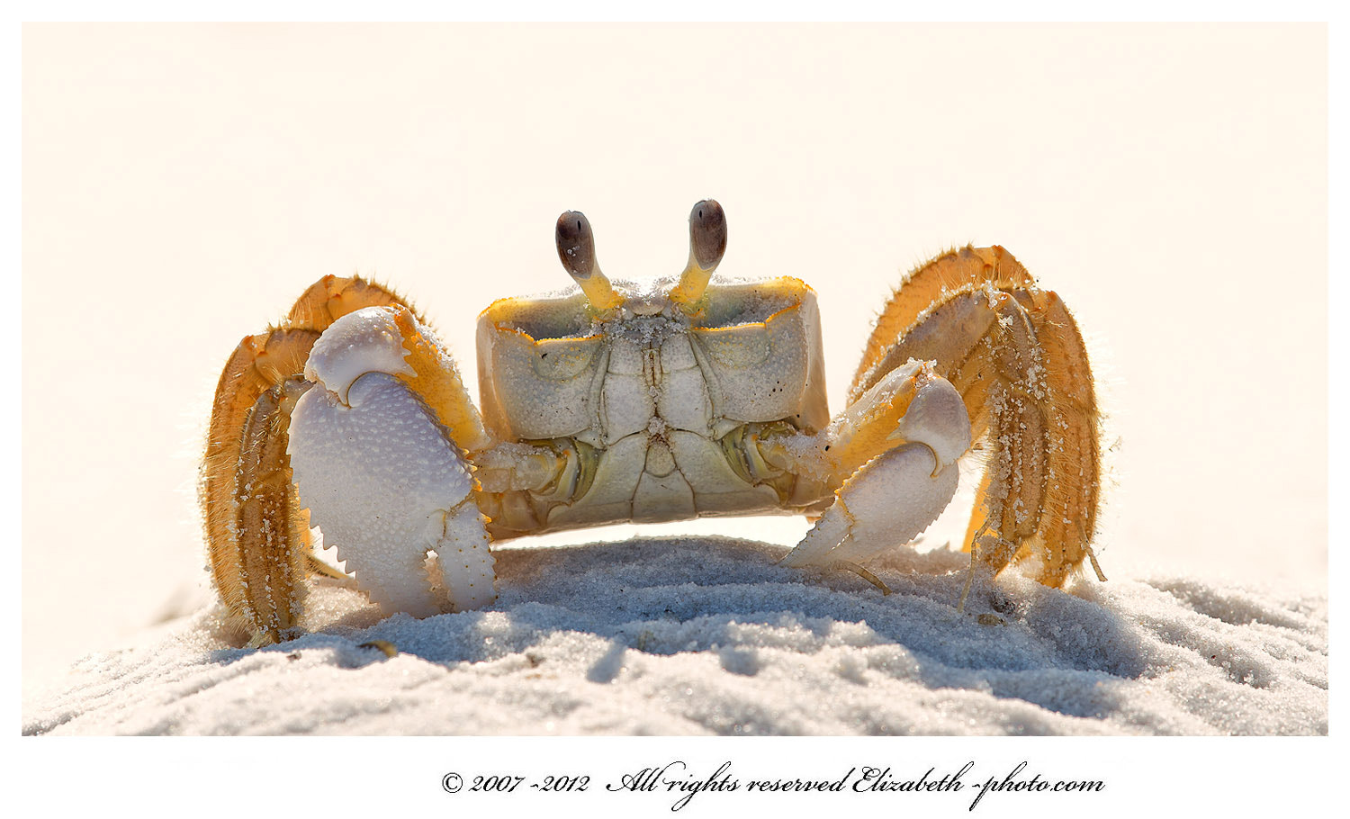 Photograph Ghost crab by Elizabeth  E. on 500px