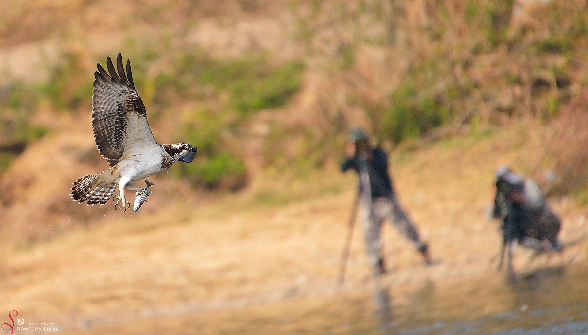 Photograph Bird & Humans by Jung-Rae Cho on 500px