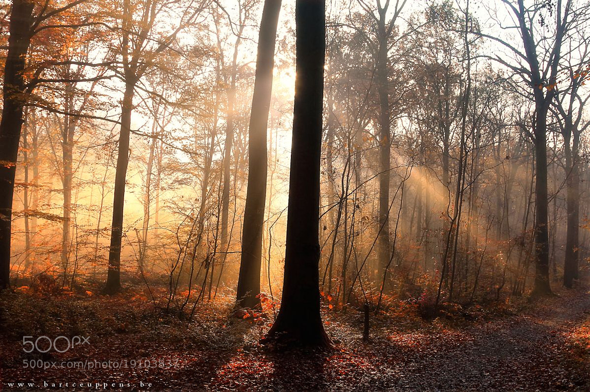 Photograph autumn mood 1 by Bart Ceuppens on 500px