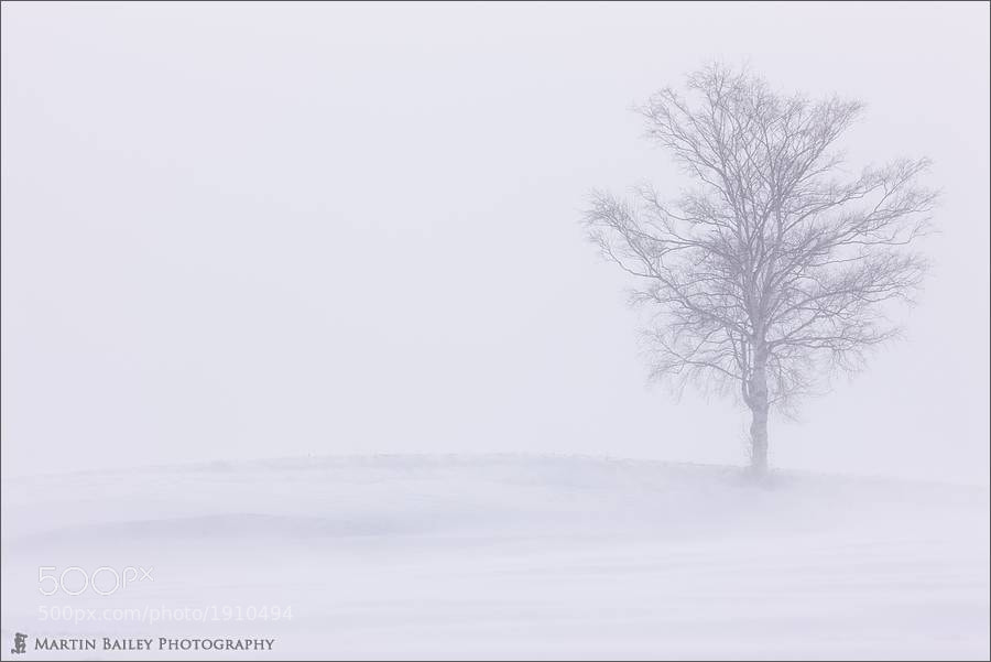 Photograph Lone Tree on a Hill by Martin Bailey on 500px