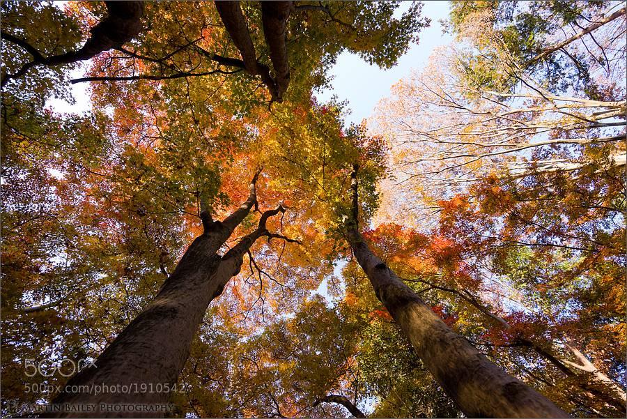 Photograph Rainbow Canopy by Martin Bailey on 500px
