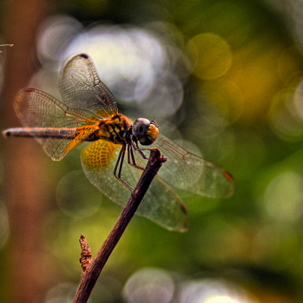 """ Dragon Fly in Bokeh.."""