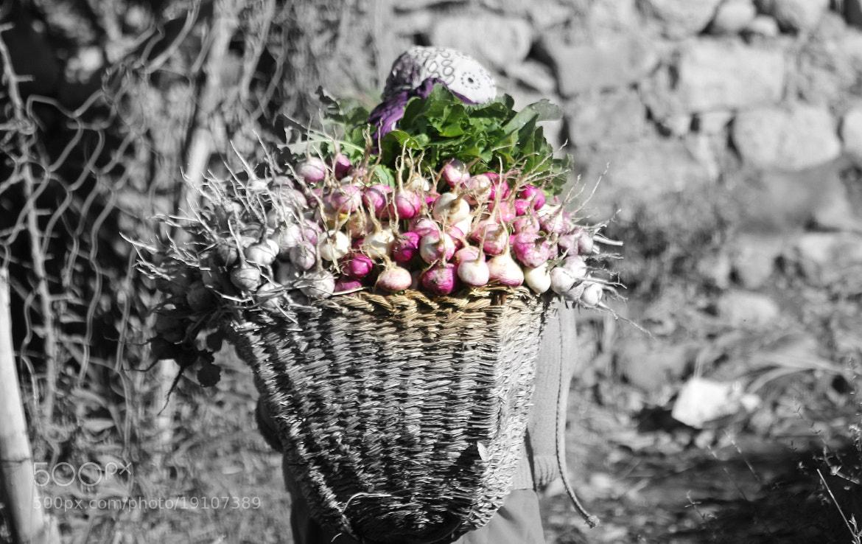 Photograph Turnips by Manaswinee Mohanty on 500px