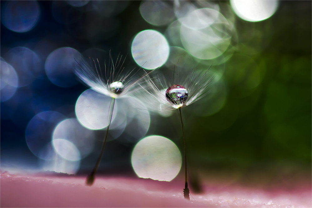 Photograph \\\..Drop../// by OKAWA โอ๋กะหว้า. somchai on 500px