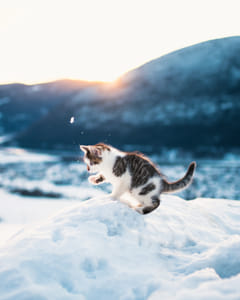 Starting the year by playing with kittens in the snow, 2017 is off to a great start!