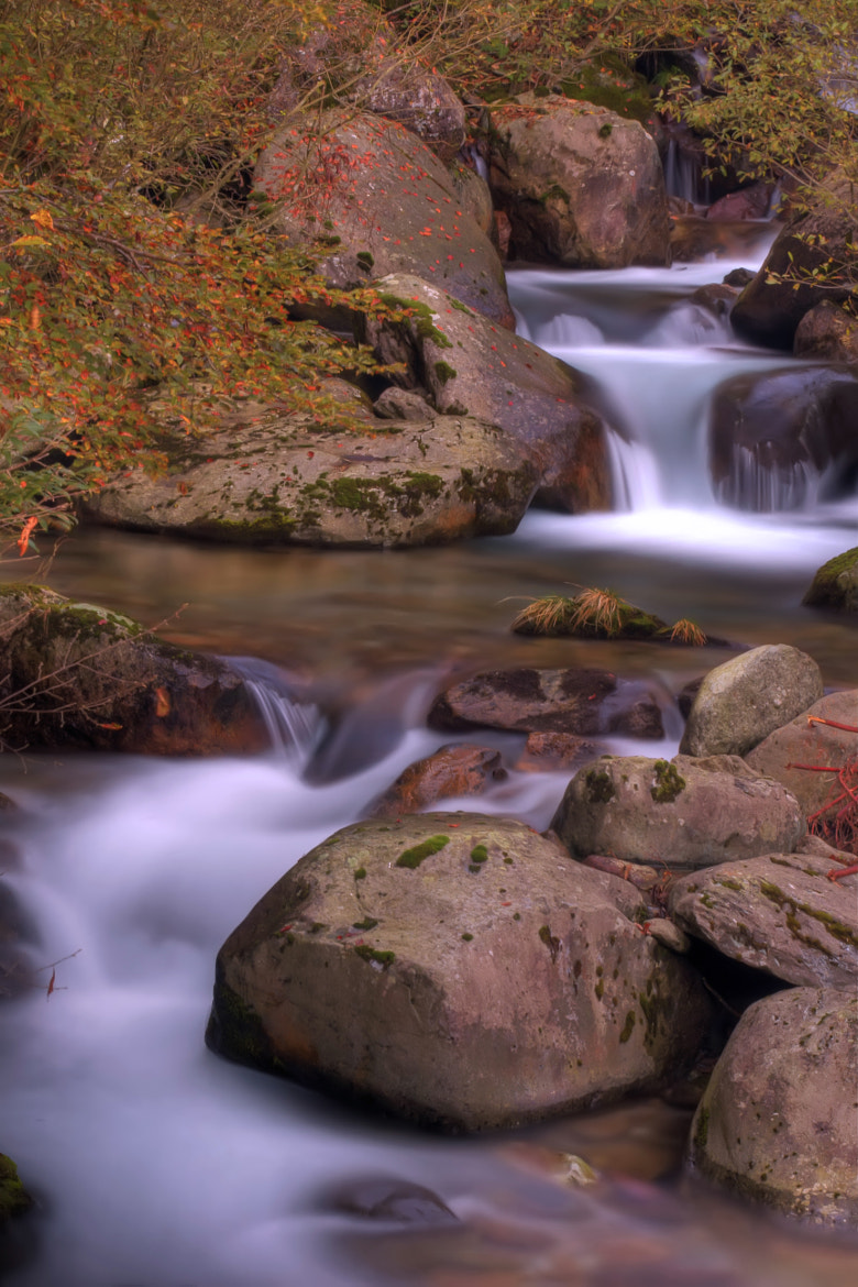 Photograph Autumn torrent II by Devid Strazzante on 500px