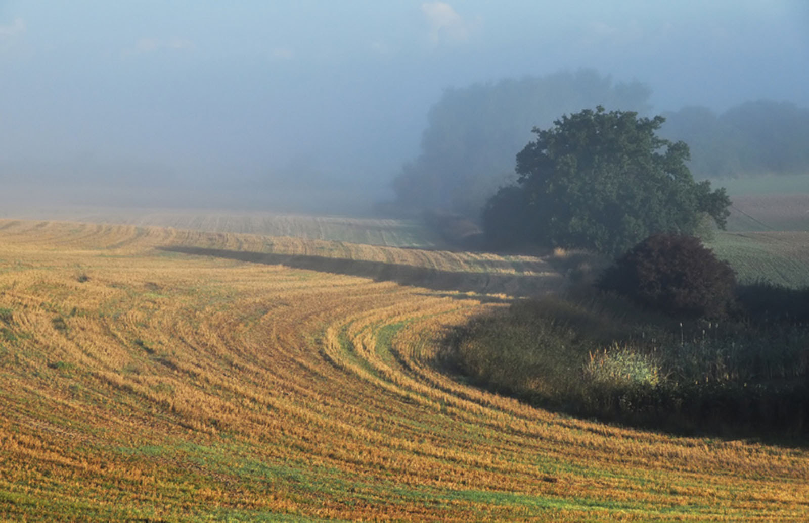 Photograph The fields at dawn by Heather Thorsen on 500px