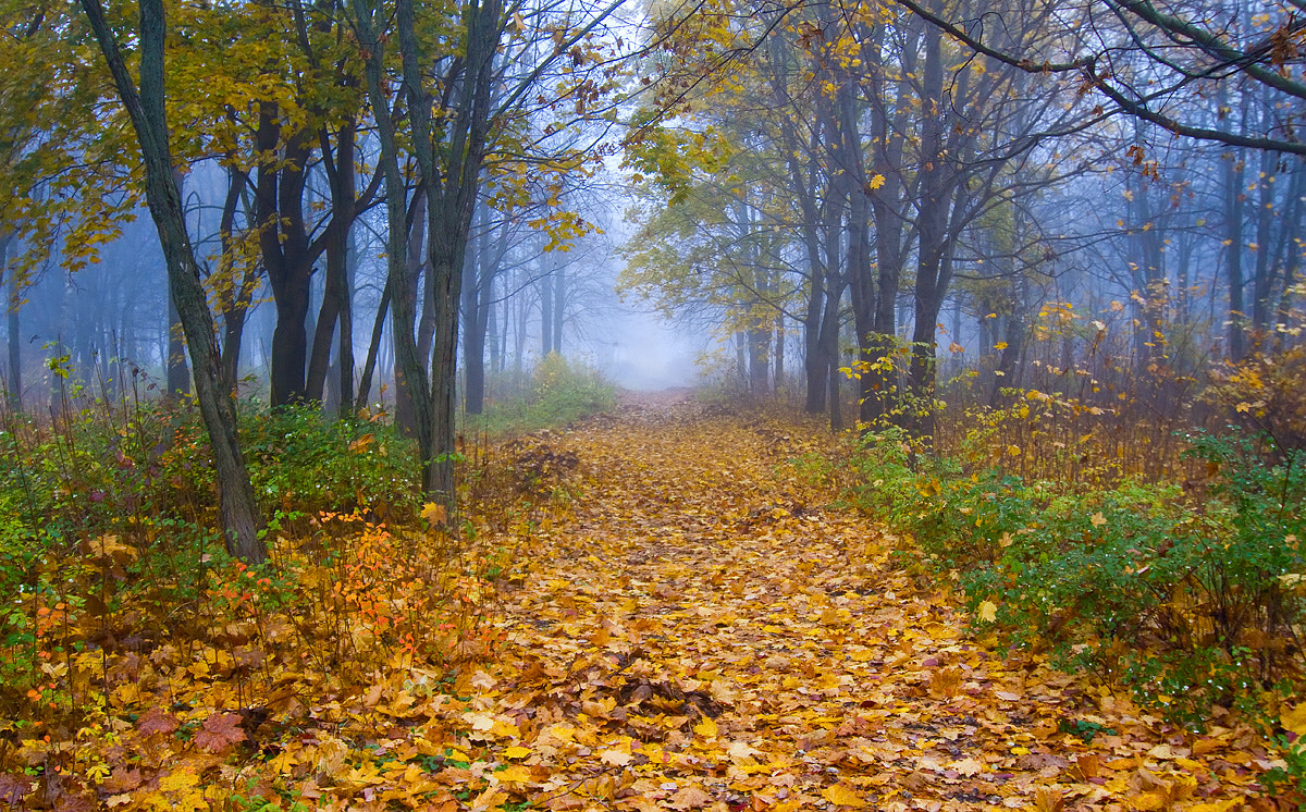 Photograph misty gold by Dmitriy Golubev on 500px