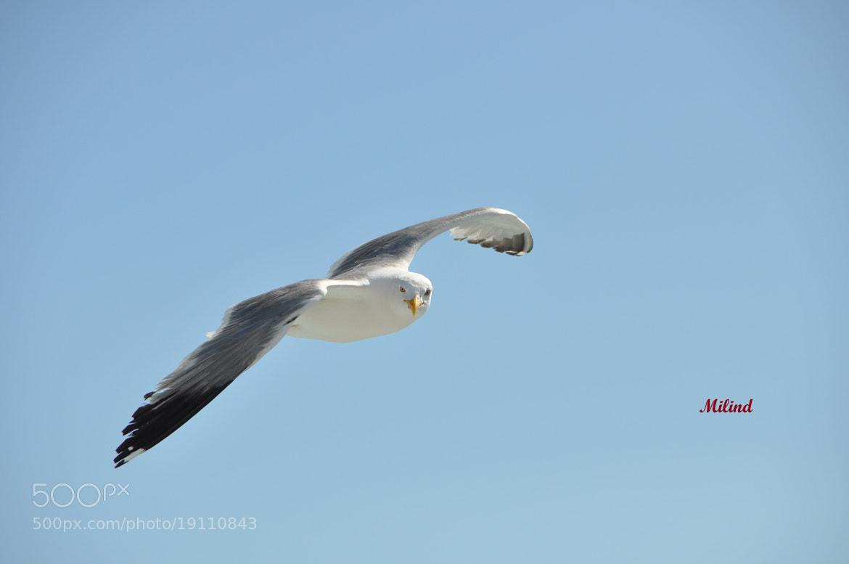 Photograph WASSUP..seagulls  by मि. देशमुख on 500px