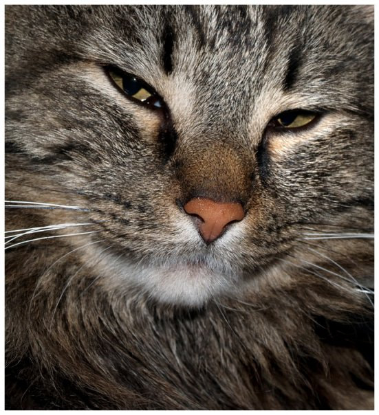Photograph Not again! by Lisa Jones on 500px