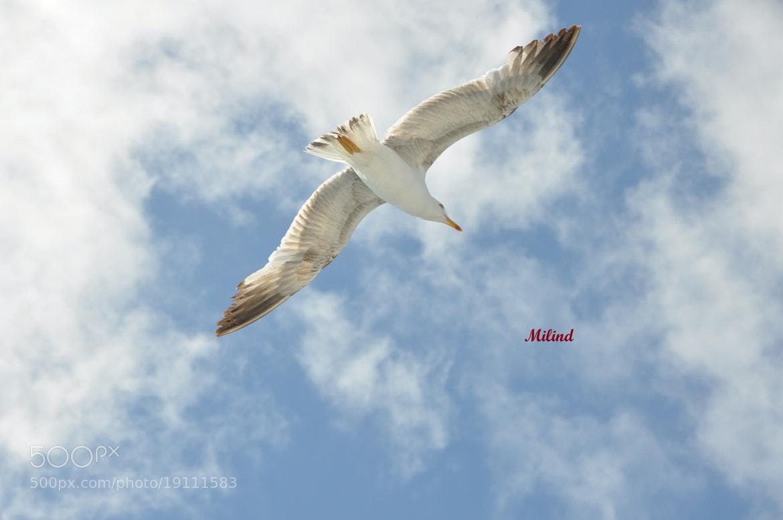 Photograph THE FLIGHT...Seagulls  by मि. देशमुख on 500px