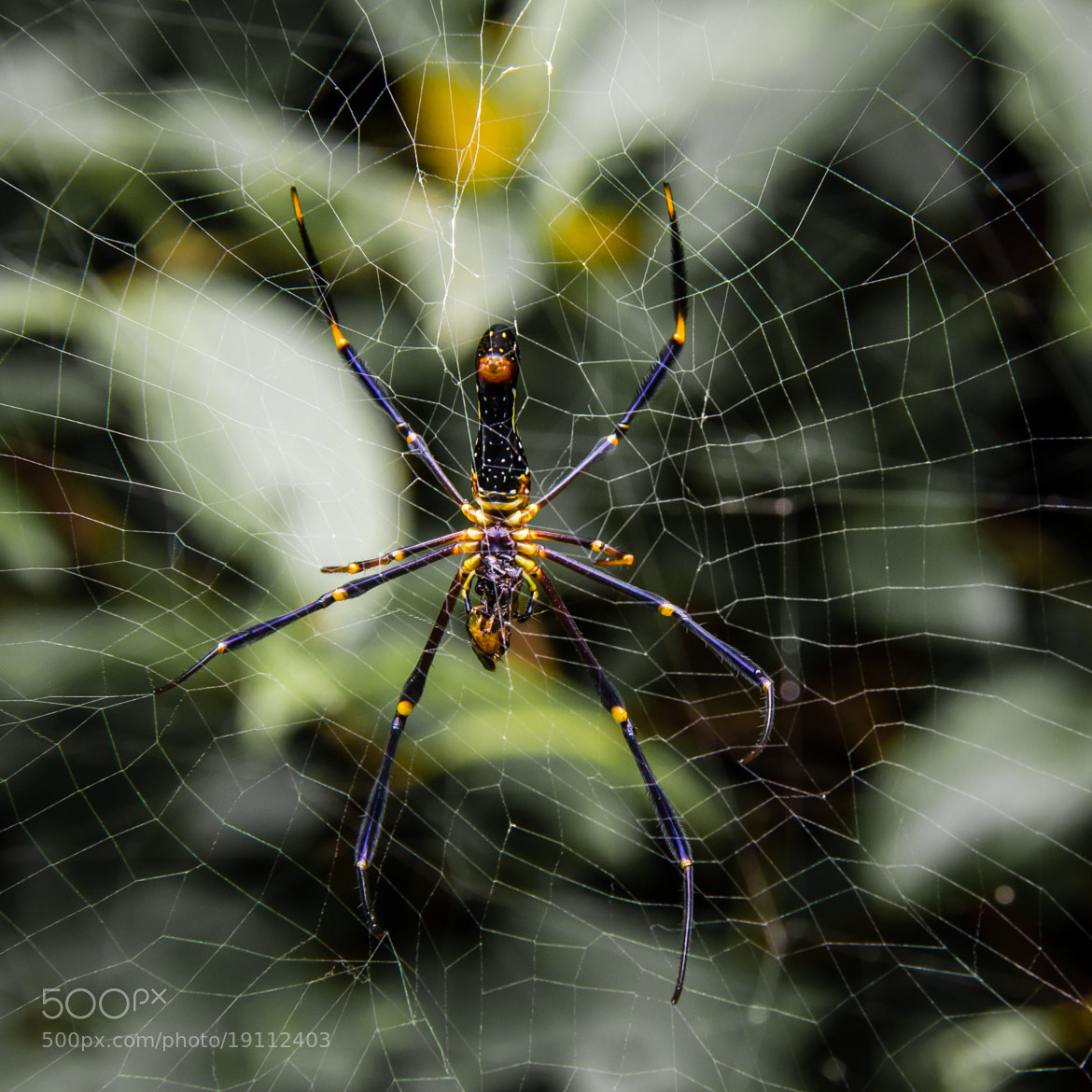 Photograph Spiderman by Jinesh Udani on 500px