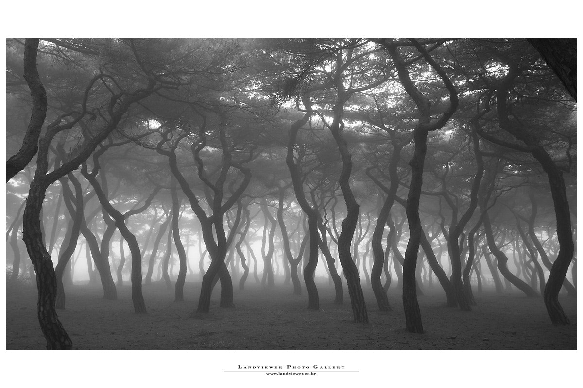 Photograph fog ... by il won choi on 500px