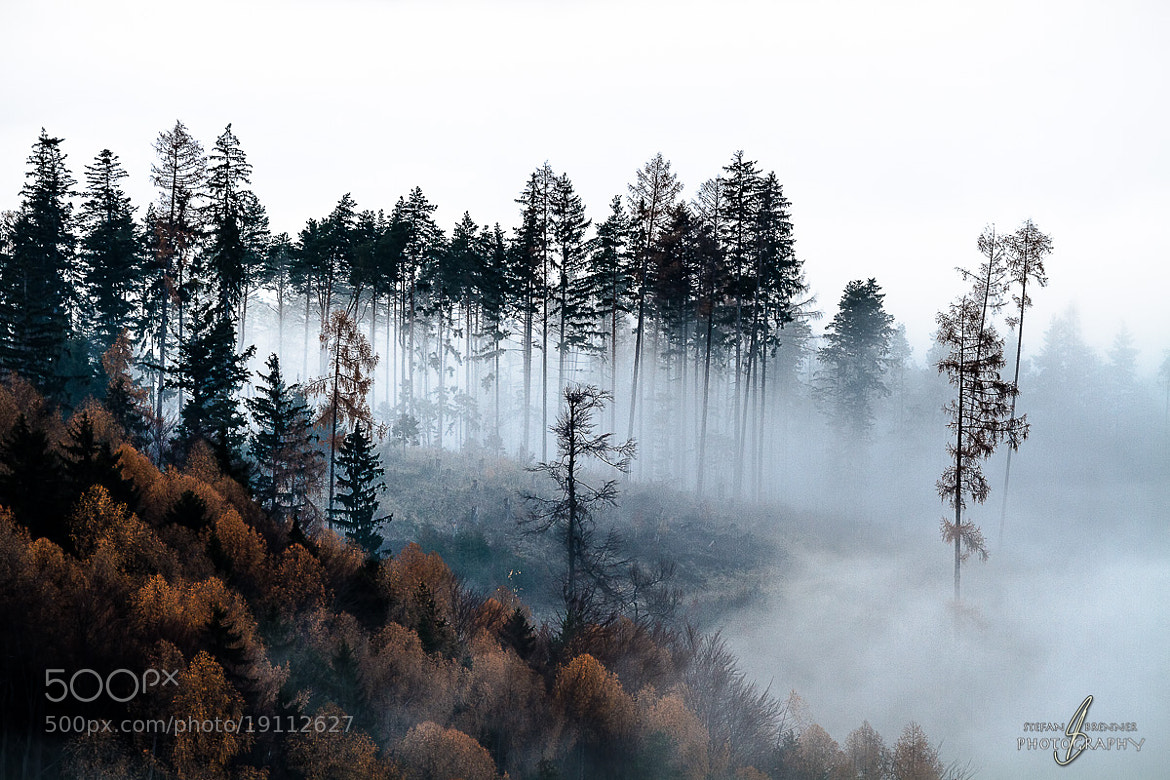 Photograph Smoky Forest by Stefan Brenner on 500px