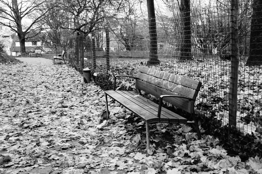Photograph Autumn by Yavuz EKMEN on 500px