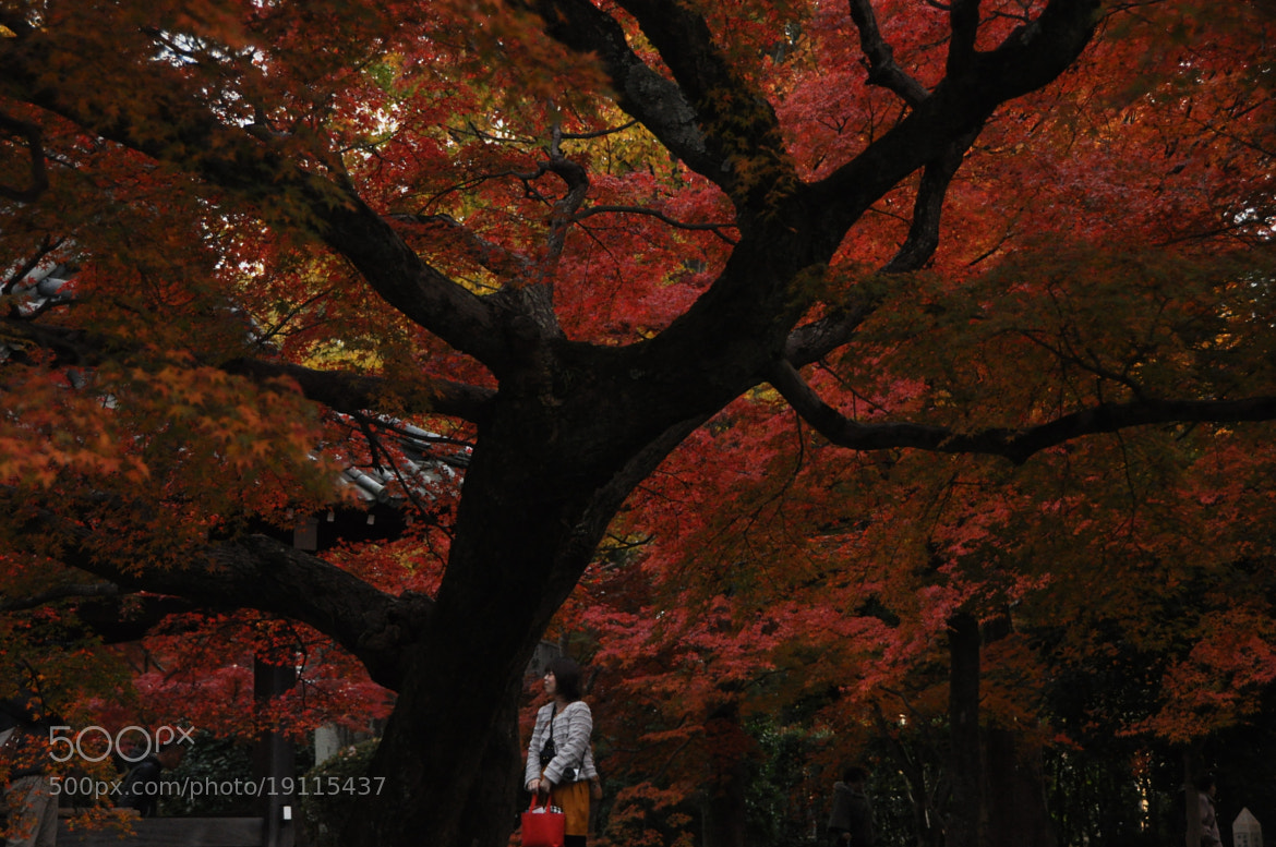Photograph Lost in Beauty of Autumn by मि. देशमुख on 500px