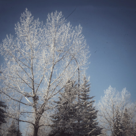 Frost, Canon POWERSHOT A590 IS