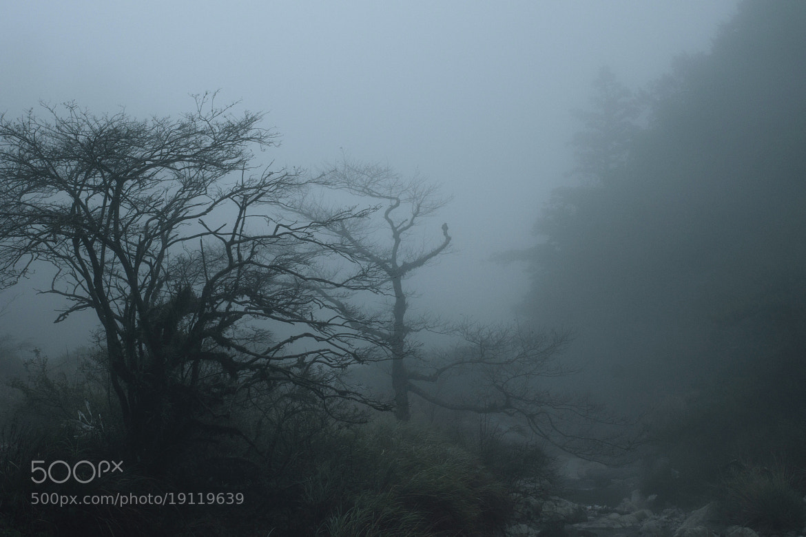 Photograph Cold,wet and heavy fog in Ssuyuan by Mingda Jiang on 500px