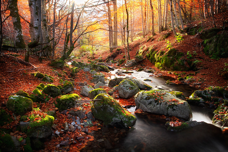 Photograph Autumnal River by Florent Courty on 500px
