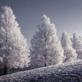 WWW - Winter White Wonderfull