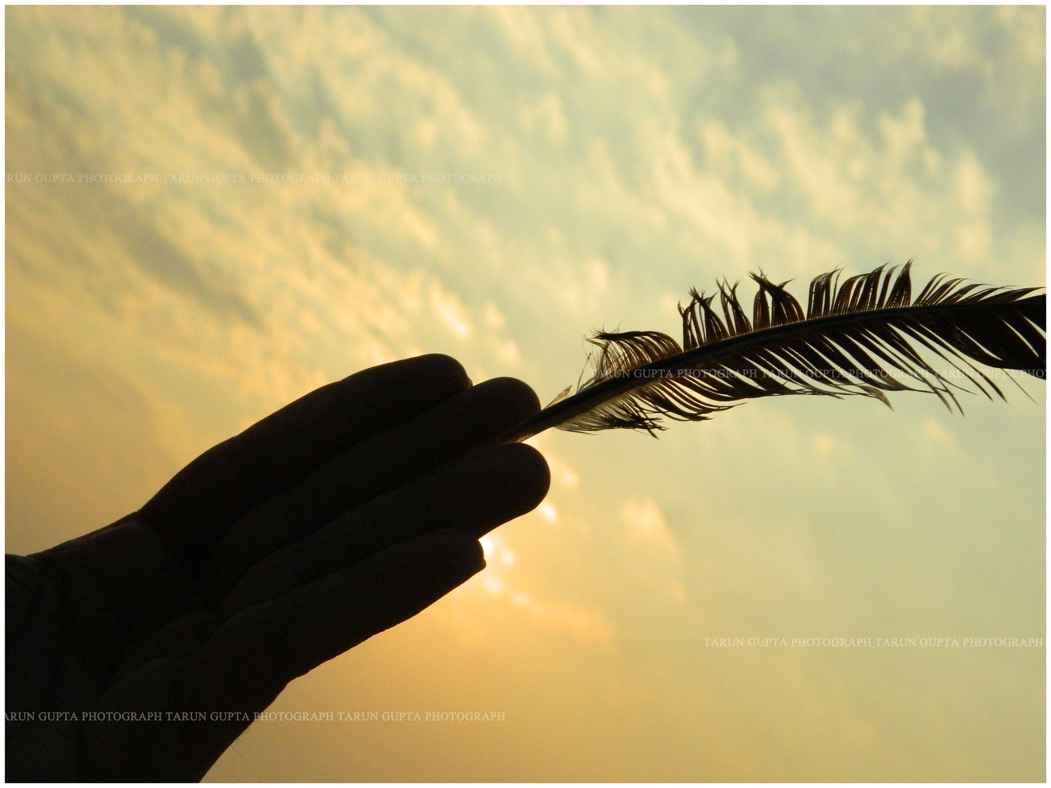 Photograph Golden Feather by Tarun Rock on 500px