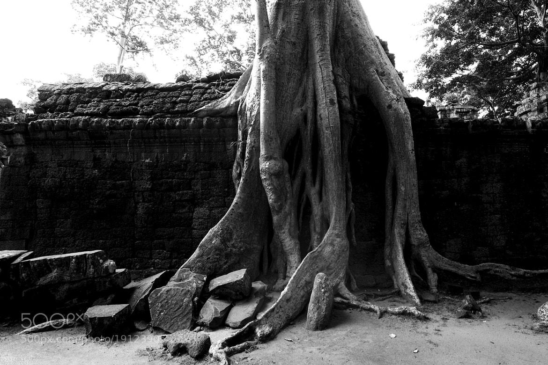 Photograph Wall & Tree by Joe Heath on 500px