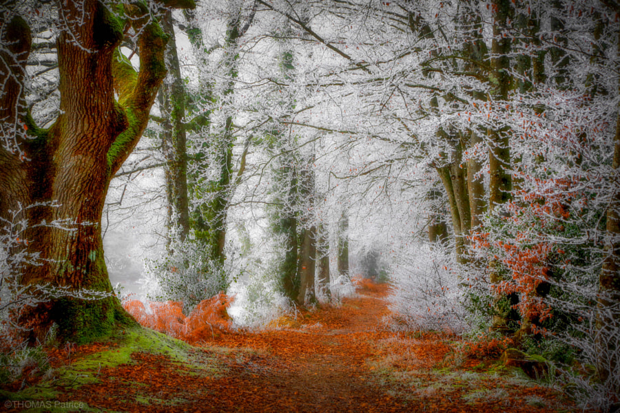 Frosted forest! by Patrice Thomas 1