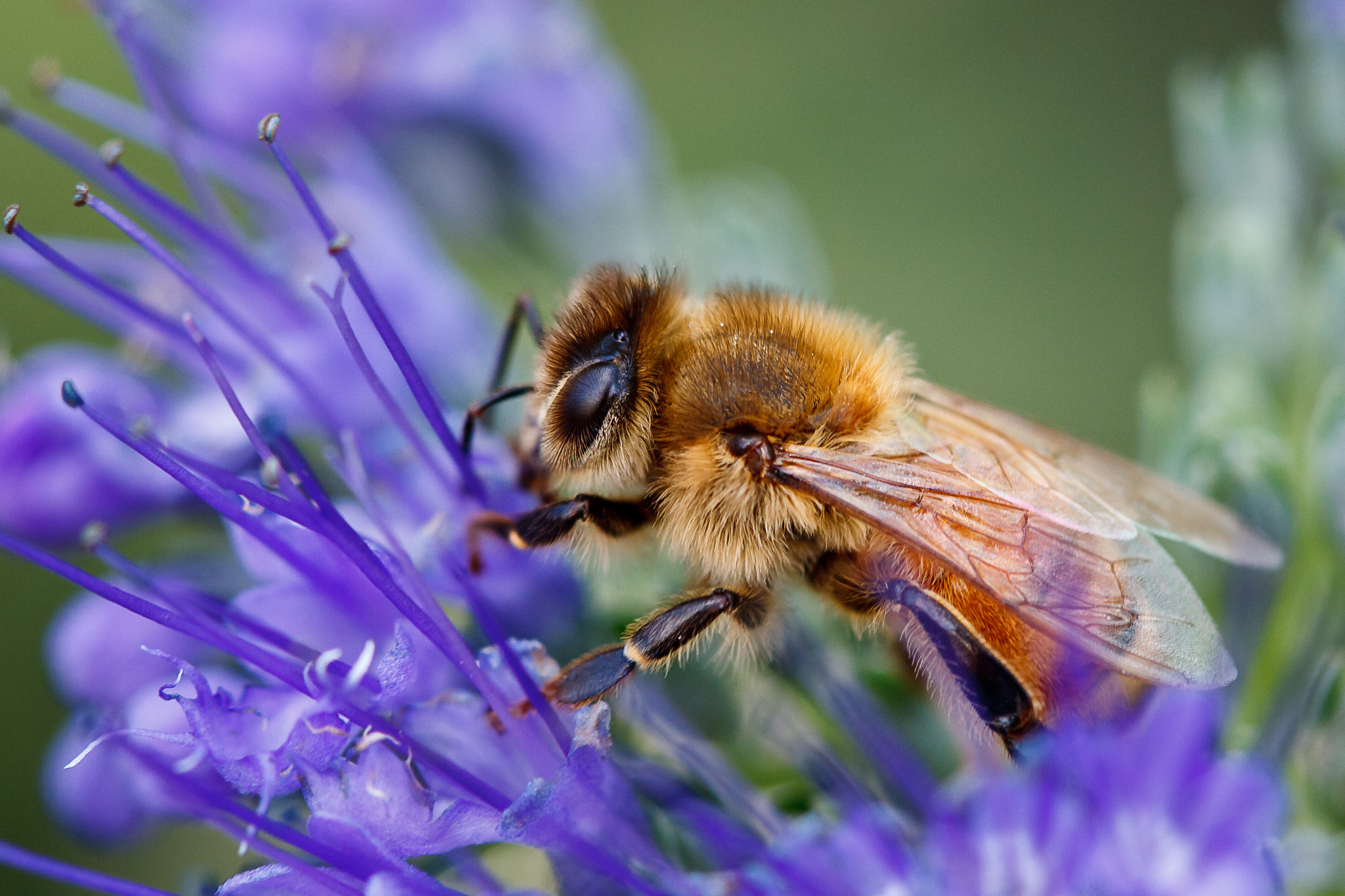 Photograph Bee-utiful by Jeremy Hall on 500px