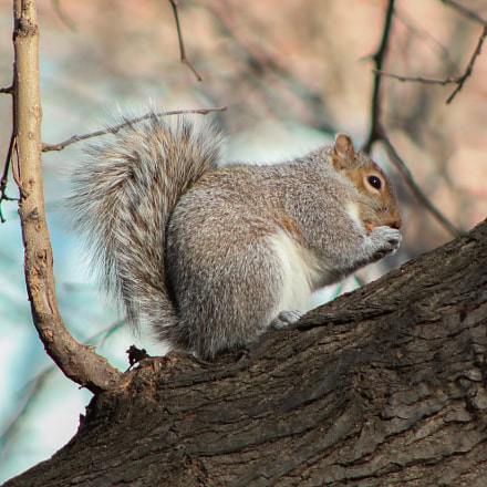 A squirrel of NYC, Canon EOS 750D, Canon EF 75-300mm f/4-5.6 USM