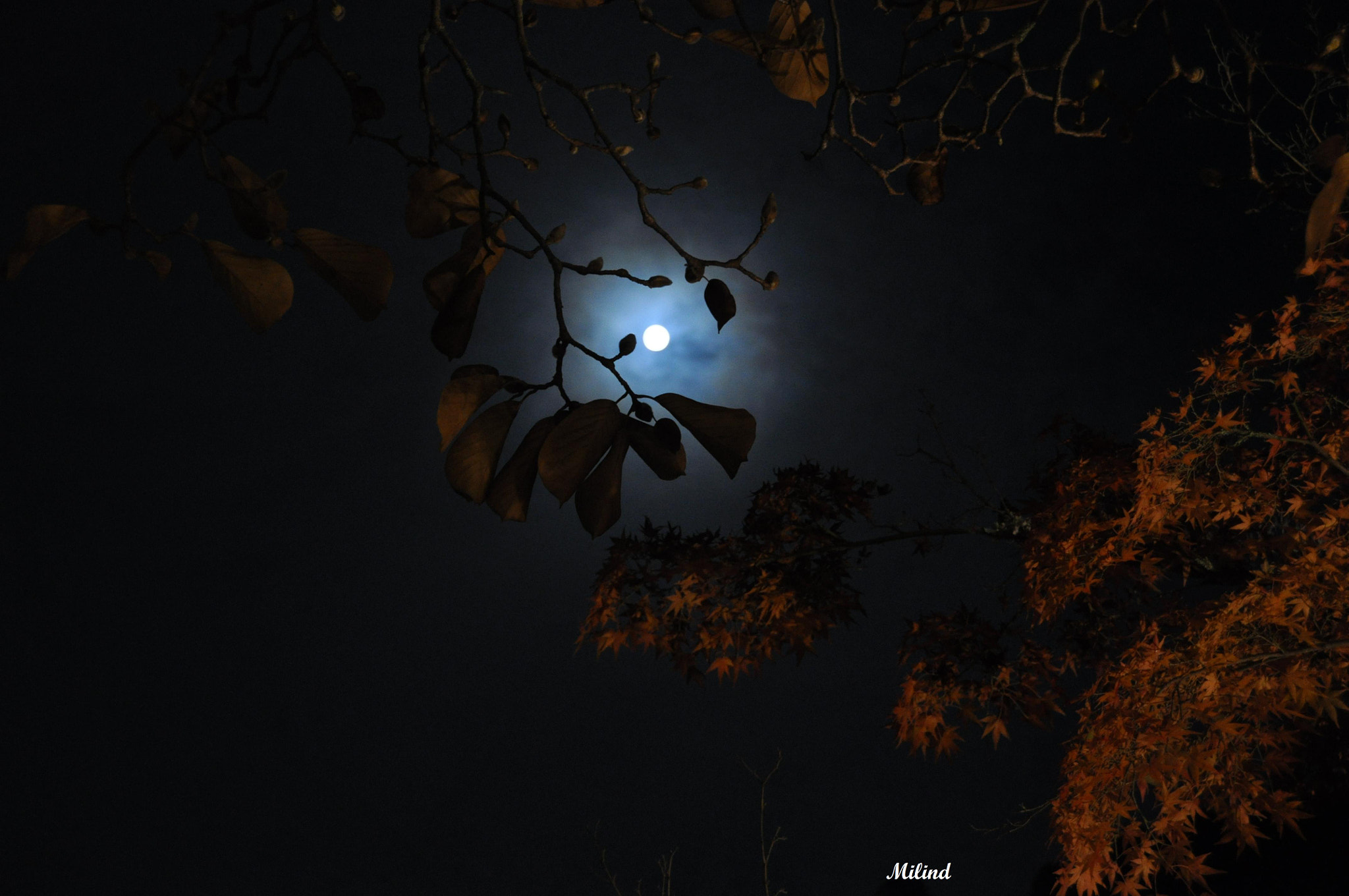 Photograph The Moon and The Fall by मि. देशमुख on 500px