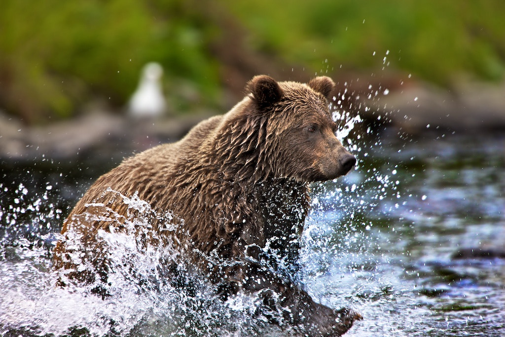 Photograph Chasing  by Buck Shreck on 500px