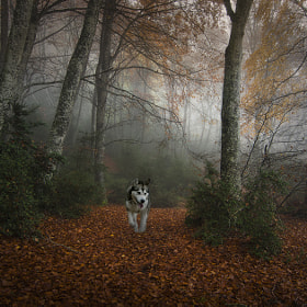 Foggy forest by inigo cia (inigocia)) on 500px.com