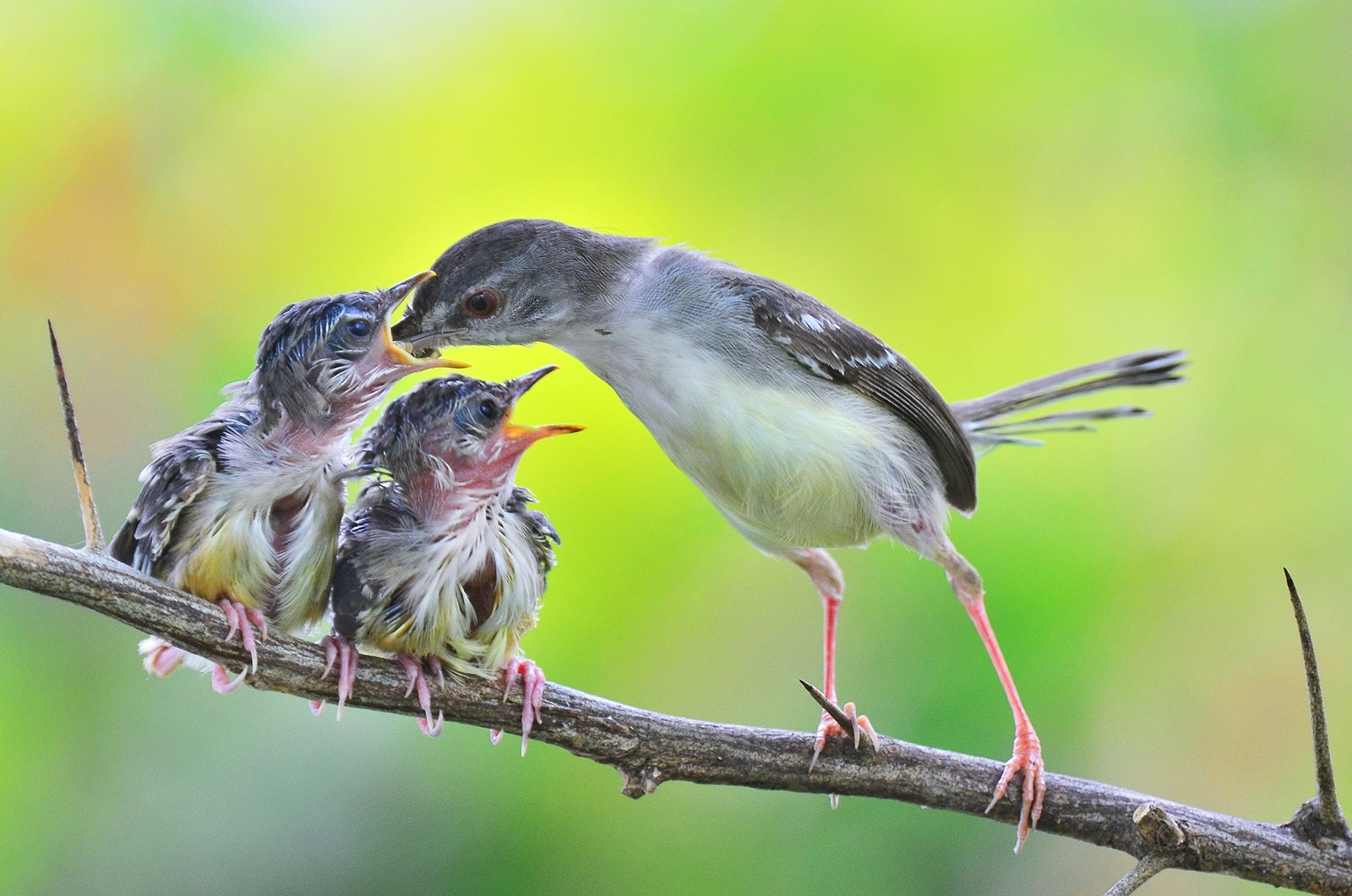 Photograph FEEDING by anas topbgt on 500px