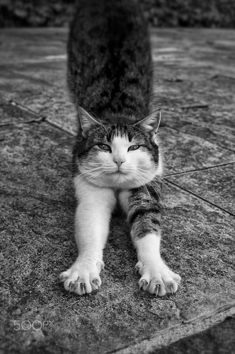 Photograph le chat by Jean-Pierre Perren on 500px