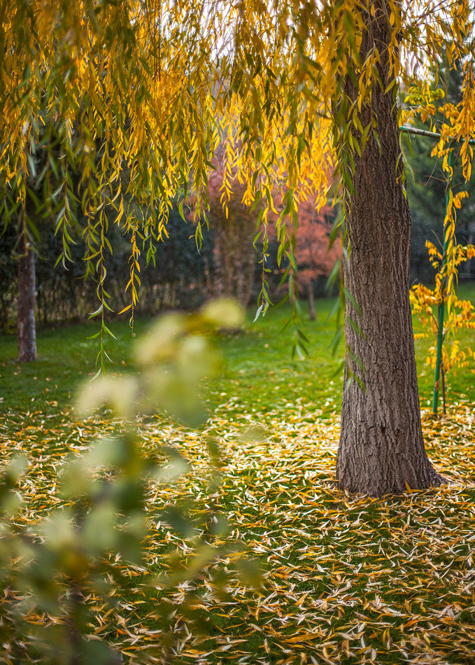 Photograph Leaves... by Hristofor Tashev on 500px