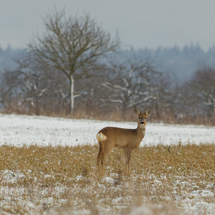 Oh Deer! , Canon EOS 6D, Canon EF 35-350mm f/3.5-5.6L