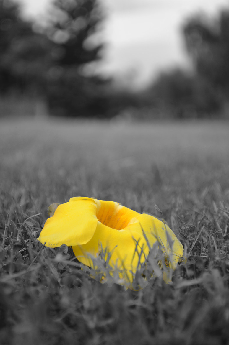 Photograph Lonely by Parampreet Dhatt on 500px