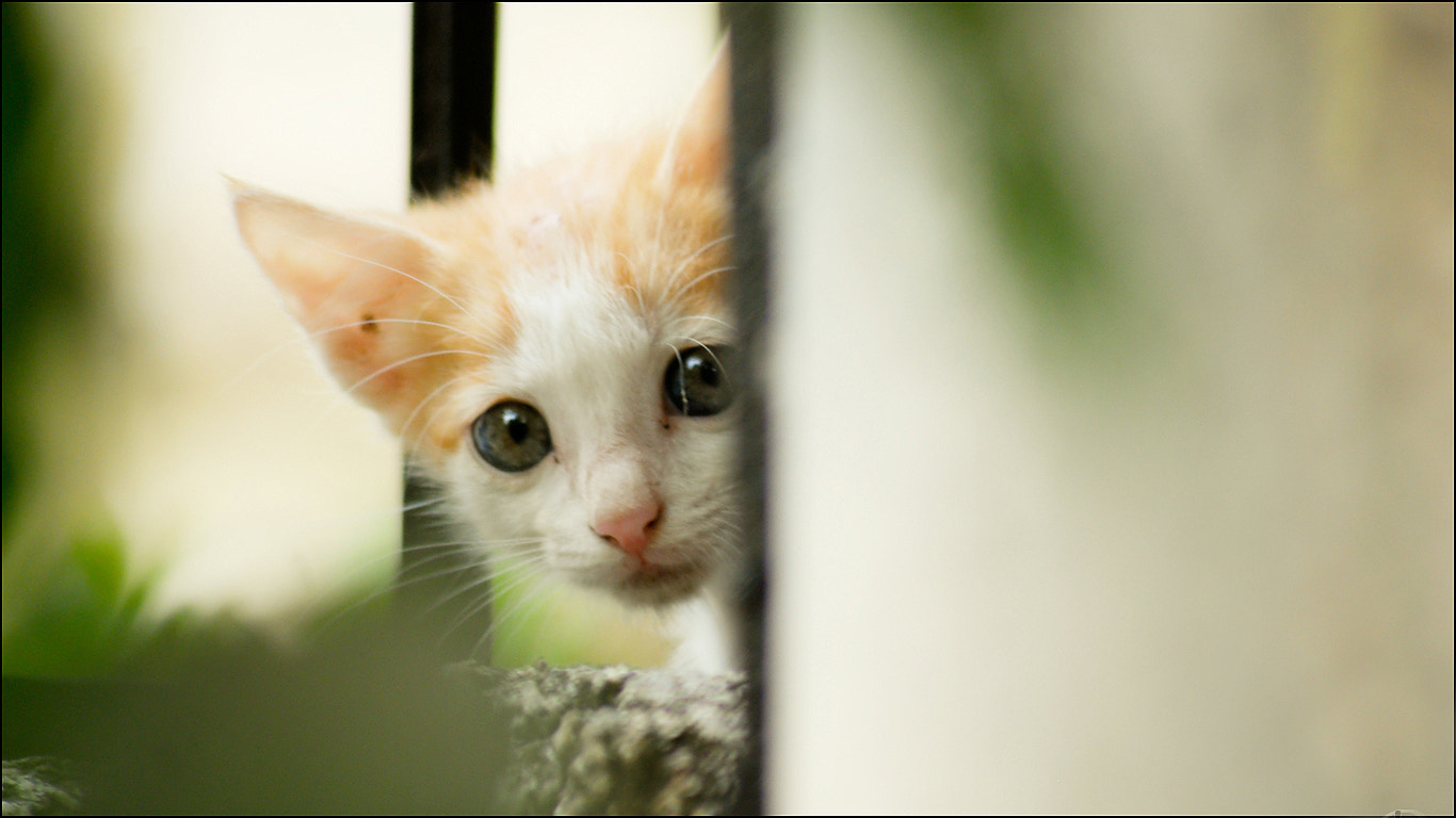 Photograph kittne watching by Paresh Khot on 500px